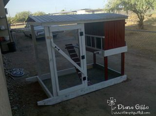 Chicken coop in place