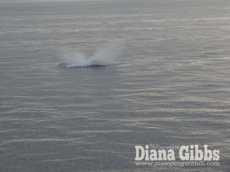 Alaska Cruise 2011 003 copy