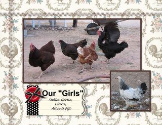 Chicken Calendar 8 x 11-001