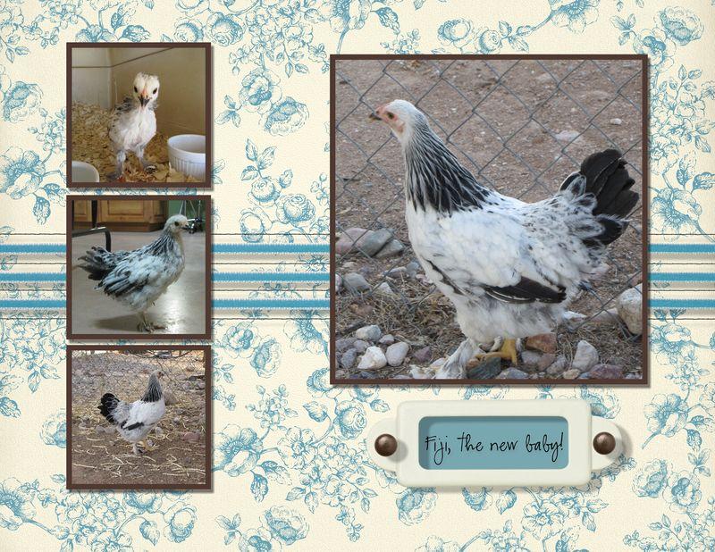 Chicken Calendar 8 x 11-004