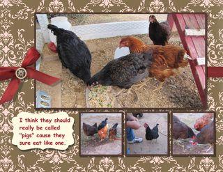 Chicken Calendar 8 x 11-018