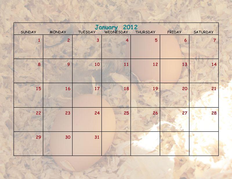 Chicken Calendar 8 x 11-003