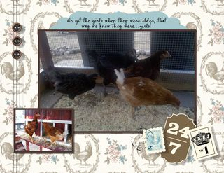 Chicken Calendar 8 x 11-006