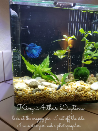King Arthur new tank in day