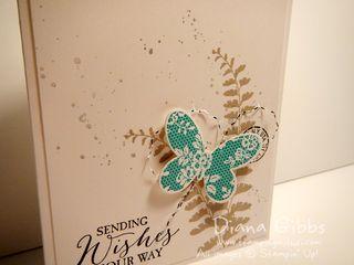 Butterfly Basics Diana Gibbs