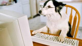 Dog at computer for virtual meeting