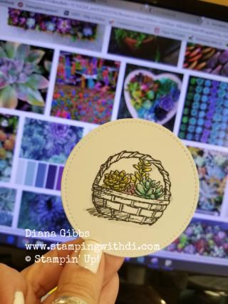 Basket of wishes cacti google Diana Gibbs
