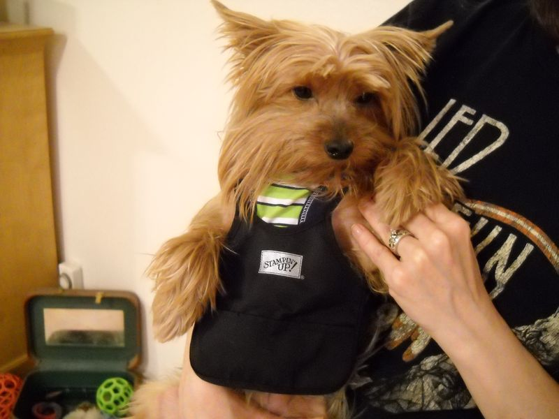 Toby with Apron