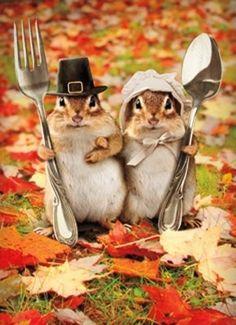 Happy Thanksgiving sqwirrels