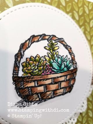 Basket of wishes cacti close up Diana Gibbs