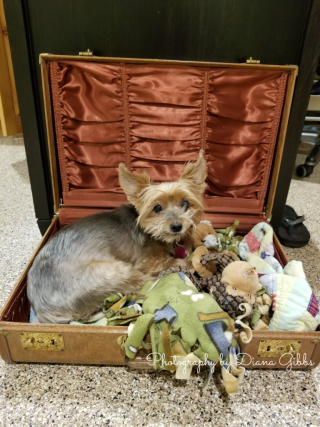 Toby in his suitcase bed.
