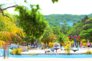 Miniature caribbean Picture 109