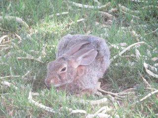 Bunny https://www.stampingwithdi.com/2020/09/tales-from-the-yard.html