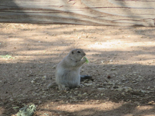 prairie dog https://www.stampingwithdi.com/2020/09/tales-from-the-yard.html