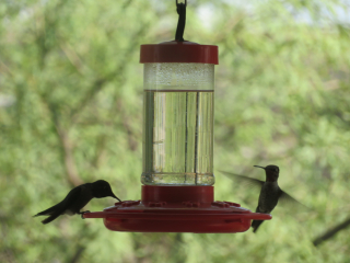 hummingbirds https://www.stampingwithdi.com/2020/10/tales-from-the-yard-part-two-the-watering-hole.html