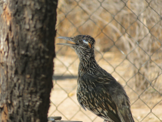 roadrunner https://www.stampingwithdi.com/2020/10/tales-from-the-yard-part-two-the-watering-hole.html