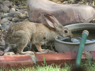 bunny https://www.stampingwithdi.com/2020/10/tales-from-the-yard-part-two-the-watering-hole.html