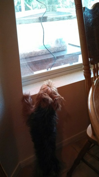 Toby watching chicks