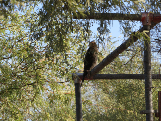hawk https://www.stampingwithdi.com/2020/10/tales-from-the-yard-part-3-what-the-heck-is-that.html